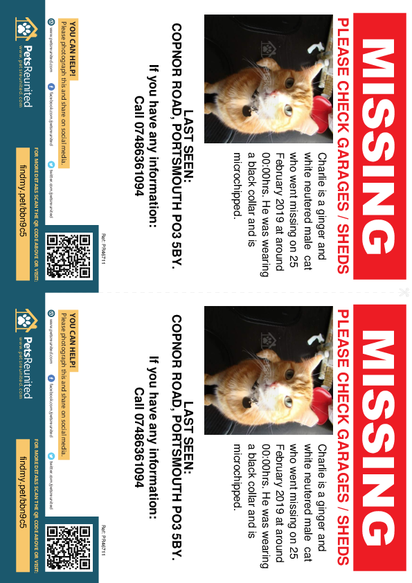 Lost pet flyers - Lost cat: Ginger and white cat called Charlie