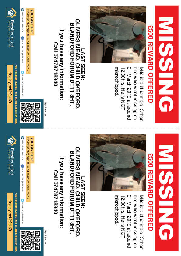 Lost pet flyers - Lost bird: Blue Other bird called Milo