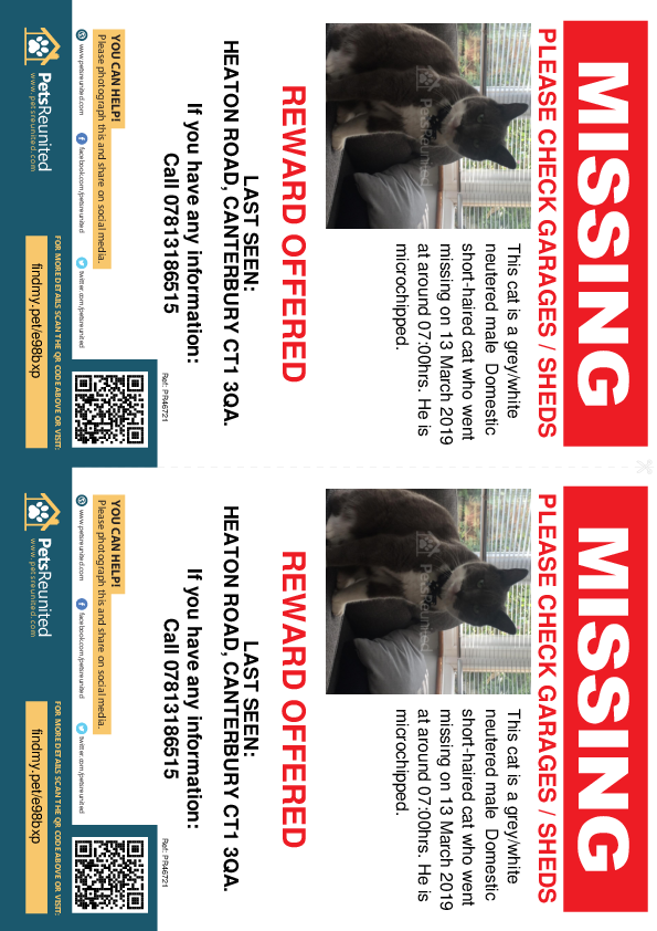 Lost pet flyers - Lost cat: Grey/White cat [name witheld]