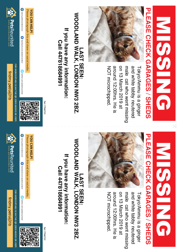 Lost pet flyers - Lost cat: Ginger and white tabby cat called Tokyo/Ammu