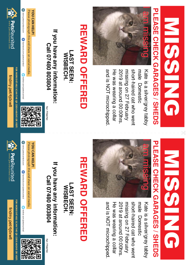 Lost pet flyers - Lost cat: Silver/Grey Tabby cat called Kate