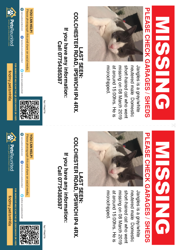 Lost pet flyers - Lost cat: Grey/White cat called Jangles