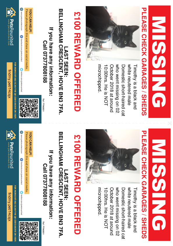 Lost pet flyers - Lost cat: Black and white cat called Timothy