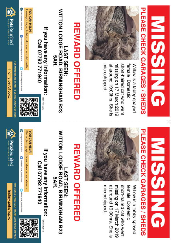 Lost pet flyers - Lost cat: Tabby cat called Willow