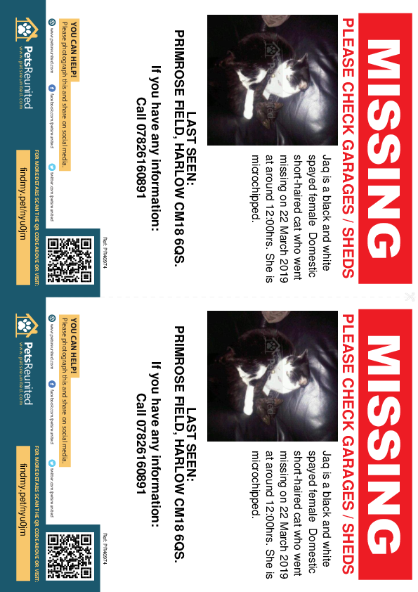 Lost pet flyers - Lost cat: Black and white cat called Jaq