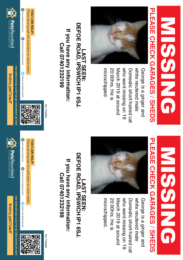 Lost pet flyers - Lost cat: Ginger and white cat called George