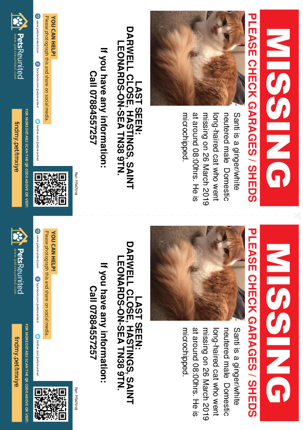 Lost pet flyers - Lost cat: Ginger/White cat called Santi