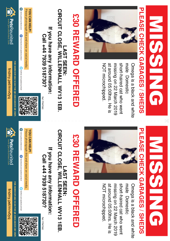 Lost pet flyers - Lost cat: Black and white cat called Omega
