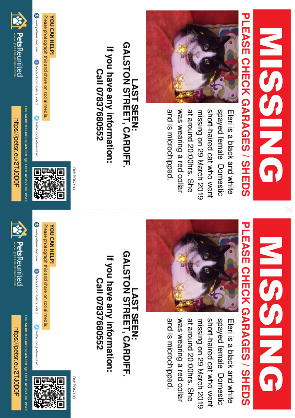Lost pet flyers - Lost cat: Black and white cat called Eleri