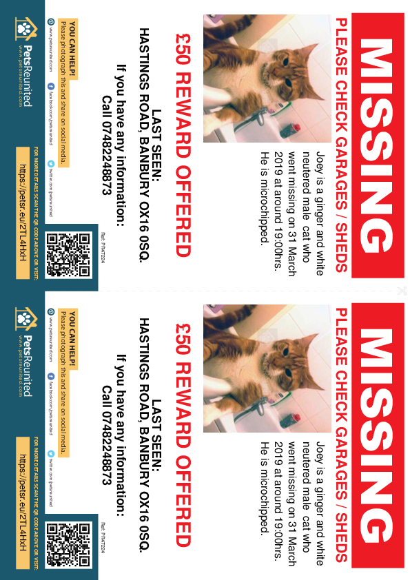 Lost pet flyers - Lost cat: Ginger and White cat called Joey