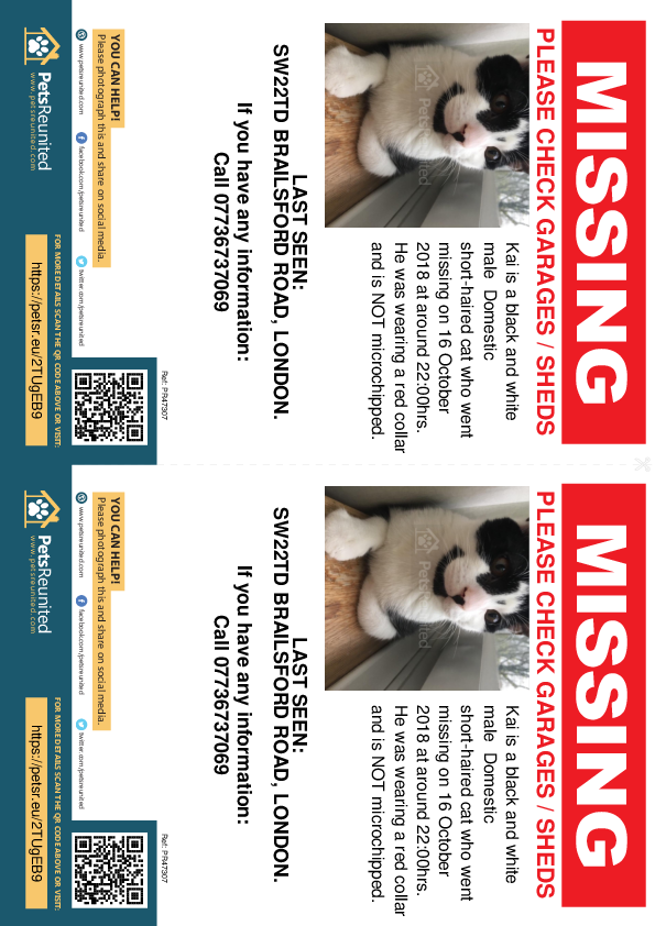 Lost pet flyers - Lost cat: Black and white cat called Kai