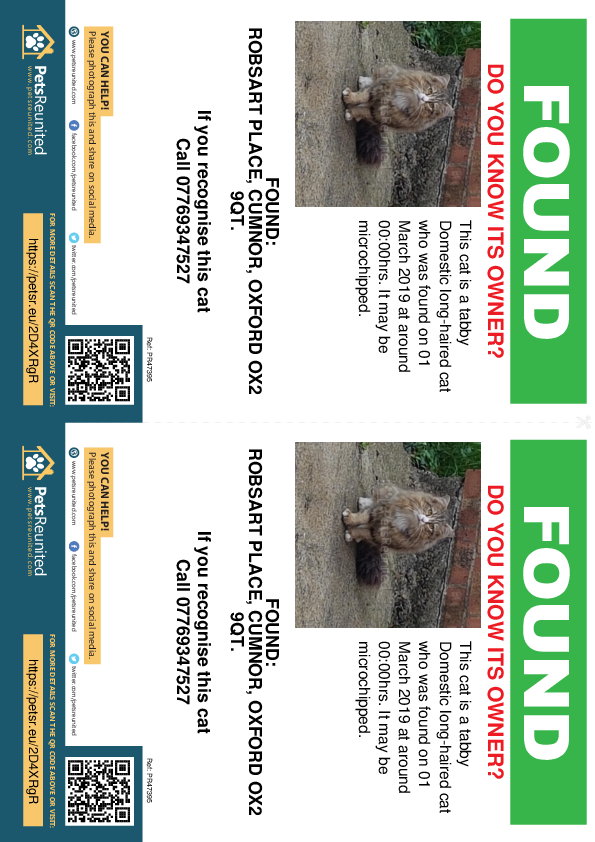 Found pet flyers - Found cat: Tabby cat