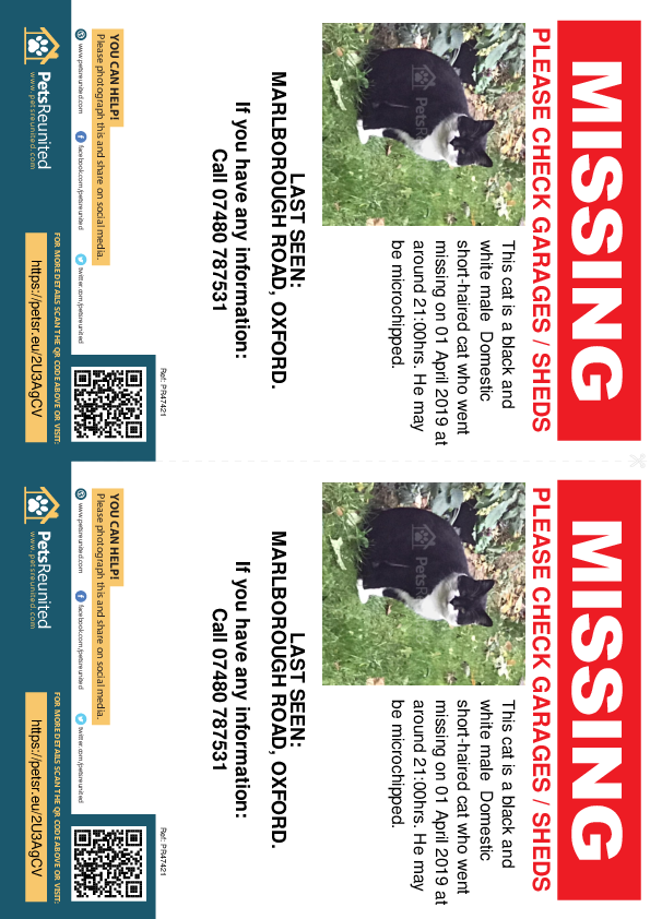 Lost pet flyers - Lost cat: Black and white cat [name witheld]