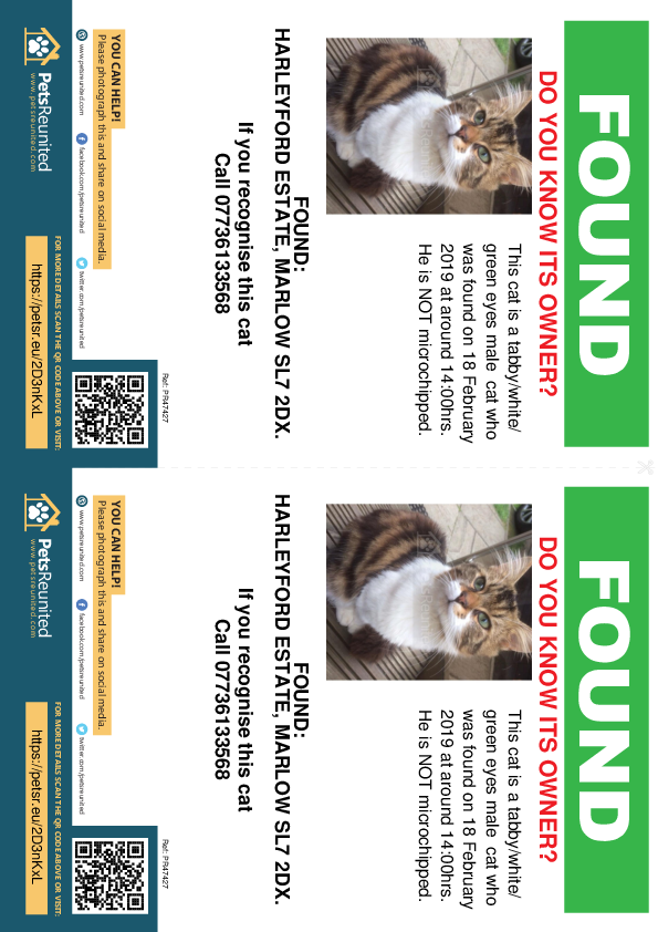 Found pet flyers - Found cat: Tabby/White/ Green Eyes cat