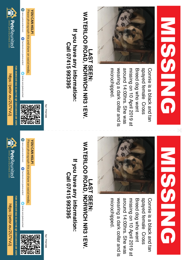Lost pet flyers - Lost dog: Black and Tan dog called Connie