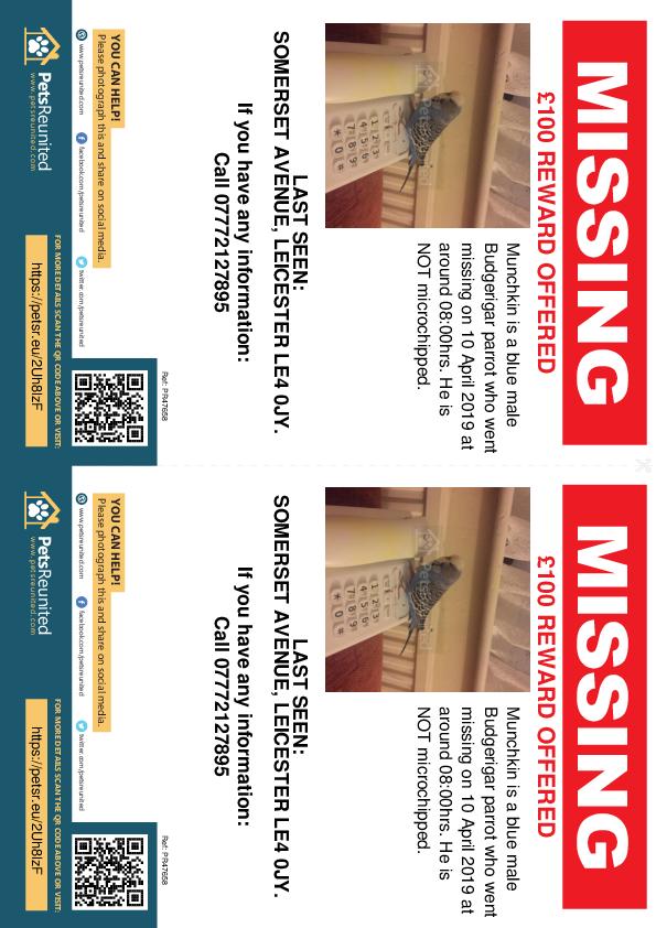 Lost pet flyers - Lost parrot: Blue Budgerigar parrot called Munchkin