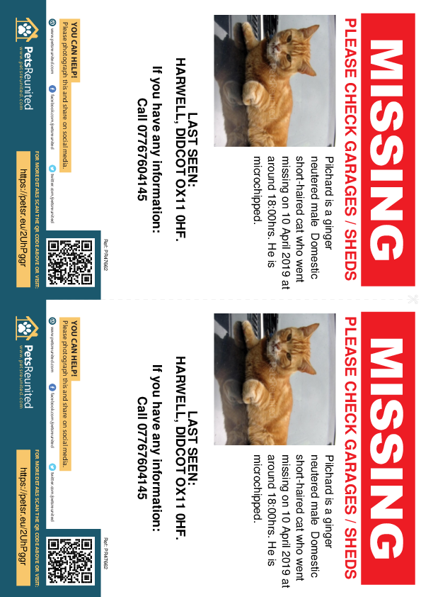 Lost pet flyers - Lost cat: Ginger cat called Pilchard