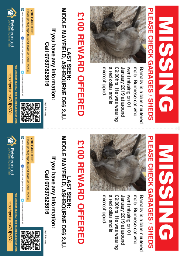 Lost pet flyers - Lost cat: Blue Burmese cat called Barnaby