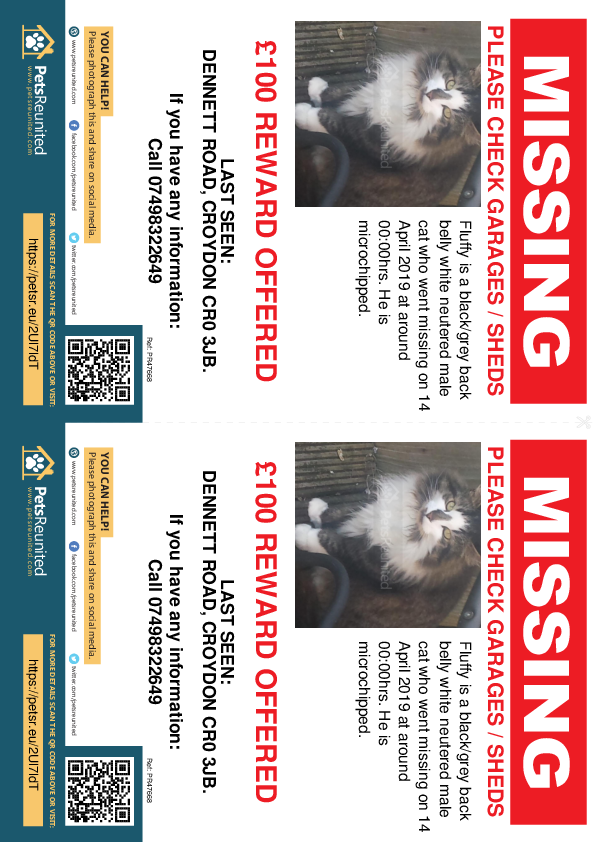 Lost pet flyers - Lost cat: BLACK/GREY BACK BELLY WHITE cat called Fluffy