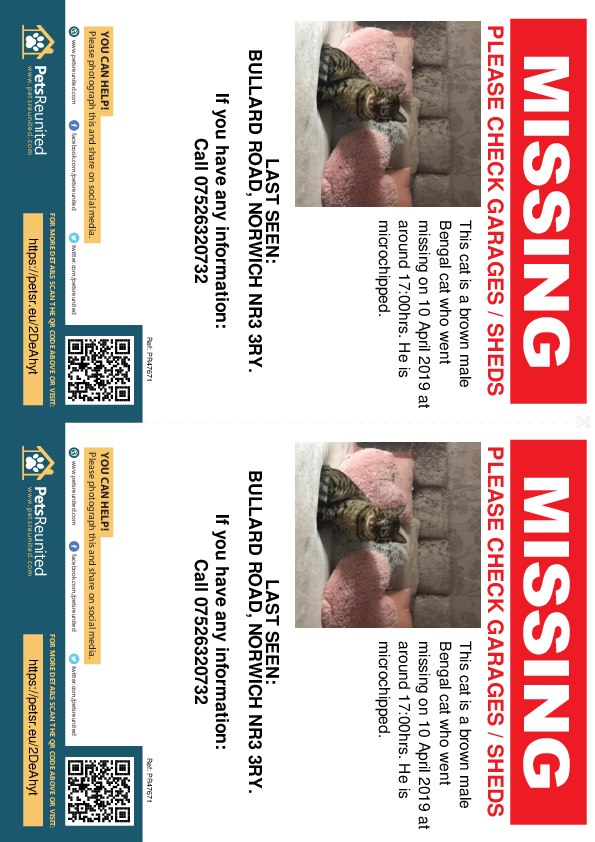 Lost pet flyers - Lost cat: Brown Bengal cat [name witheld]