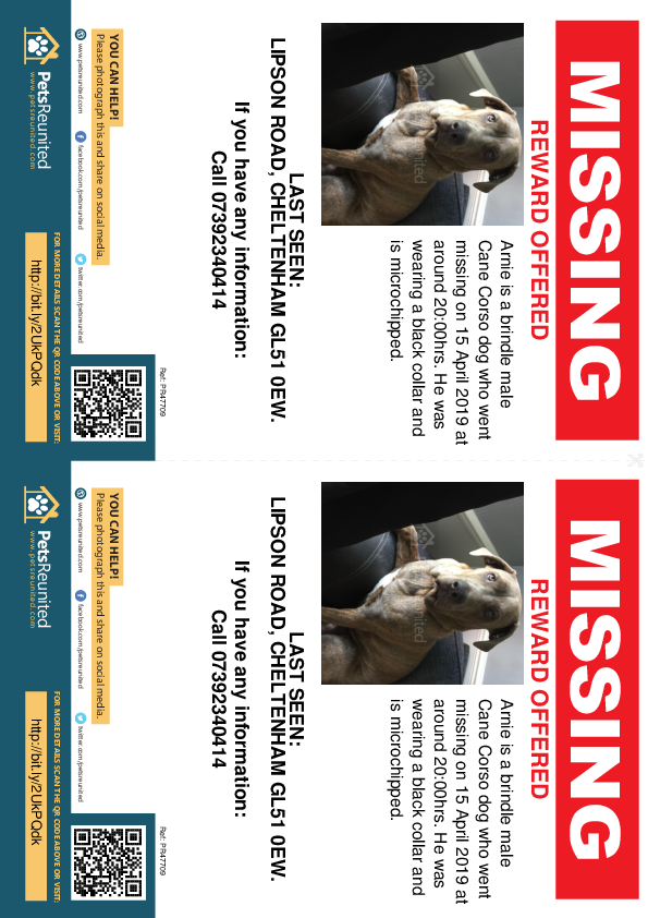 Lost pet flyers - Lost dog: Brindle Cane Corso dog called Arnie
