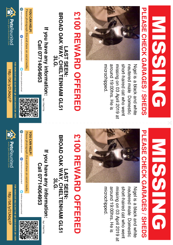 Lost pet flyers - Lost cat: Black and white cat called Nigel