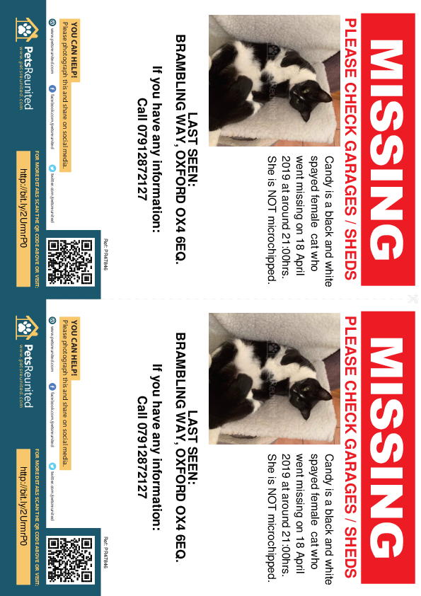 Lost pet flyers - Lost cat: Black and white cat called Candy
