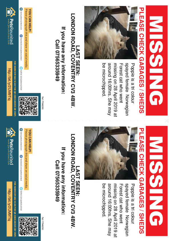 Lost pet flyers - Lost cat: Tri Colour Norwegian Forest cat called Poppie