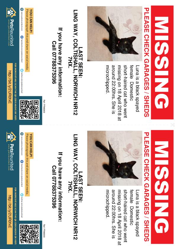 Lost pet flyers - Lost cat: Black cat called Luna