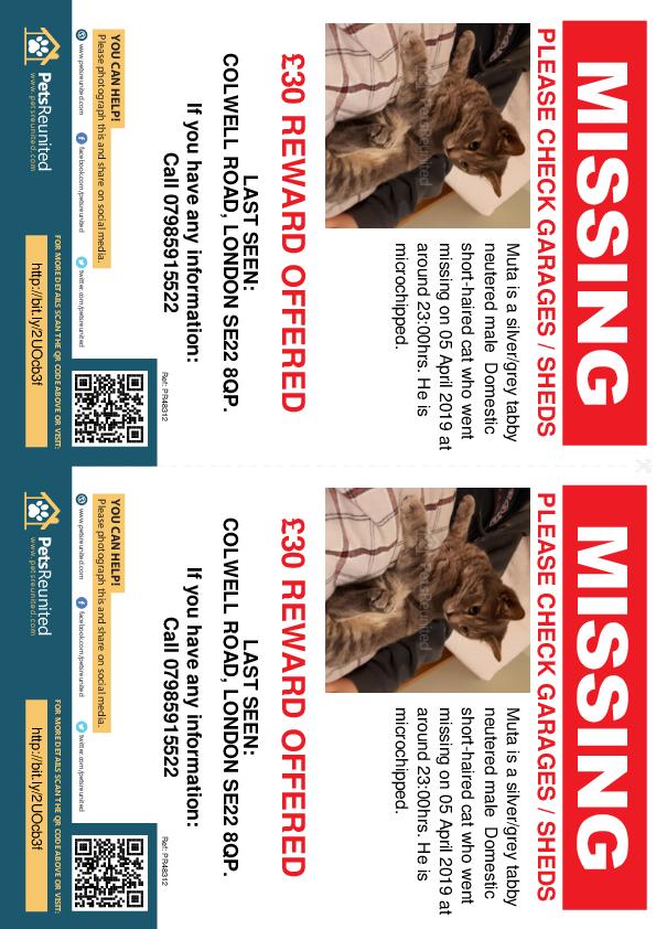 Lost pet flyers - Lost cat: Silver/Grey Tabby cat called Muta