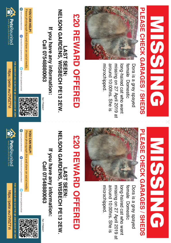 Lost pet flyers - Lost cat: Grey cat called Dora