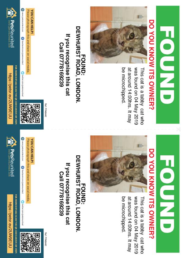 Found pet flyers - Found cat: Tabby cat