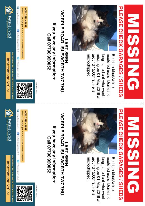 Lost pet flyers - Lost cat: Black/White cat called Bert