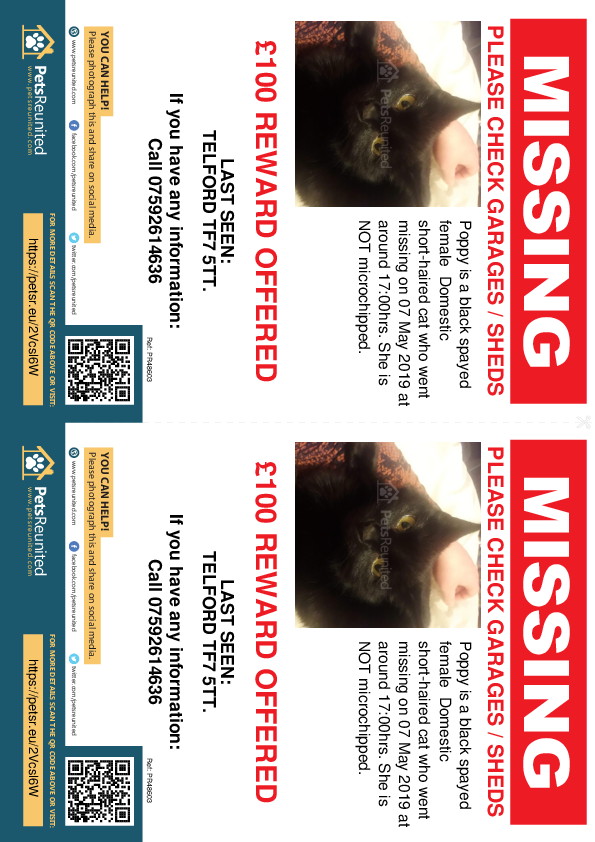 Lost pet flyers - Lost cat: Black cat called Poppy