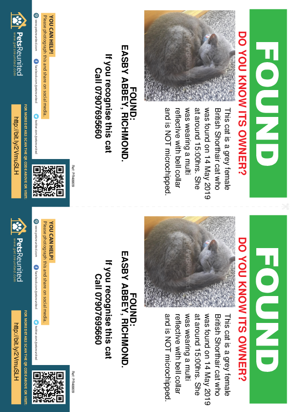Found pet flyers - Found cat: Grey British Shorthair cat