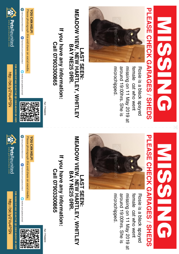 Lost pet flyers - Lost cat: Black cat called Rosie