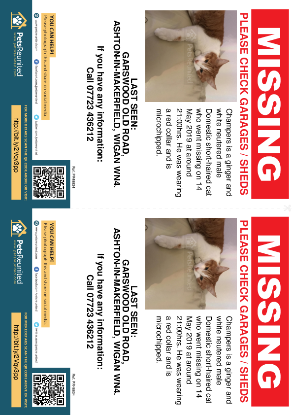 Lost pet flyers - Lost cat: Ginger and white cat called Champers