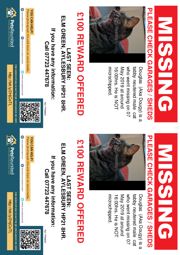 Lost pet flyers - Lost cat: Tabby cat called Douglas  (Aka Dougy)