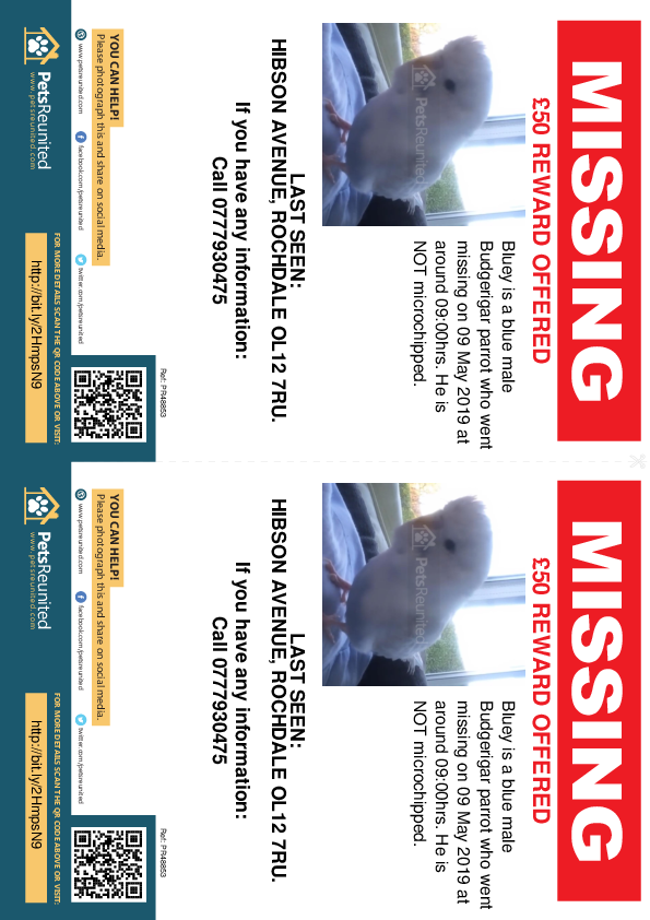 Lost pet flyers - Lost parrot: Blue Budgerigar parrot called Bluey