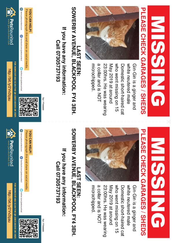 Lost pet flyers - Lost cat: Ginger and white cat called Gin-Gin