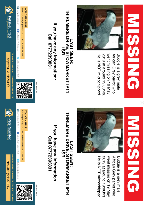 Lost pet flyers - Lost parrot: Grey African Grey parrot called Budgie