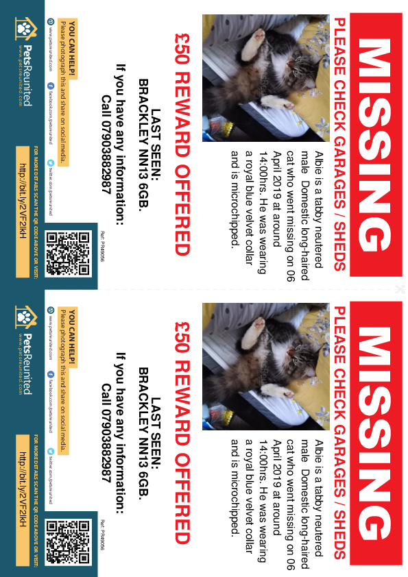 Lost pet flyers - Lost cat: Tabby cat called Albie
