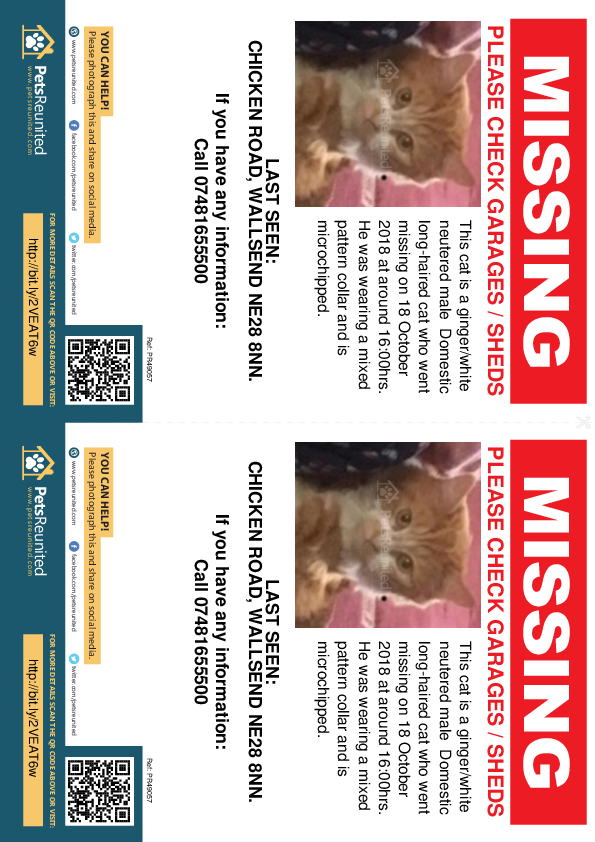 Lost pet flyers - Lost cat: Ginger/White cat [name witheld]