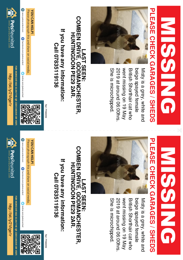 Lost pet flyers - Lost cat: Grey, white and beige British Shorthair cat called Misty