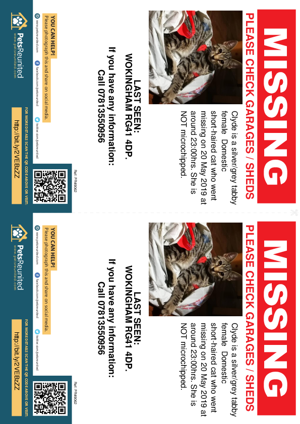 Lost pet flyers - Lost cat: Silver/Grey Tabby cat called Clyde