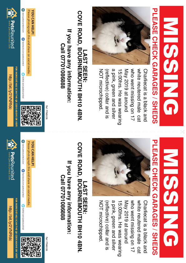 Lost pet flyers - Lost cat: Black and white cat called Charliecat