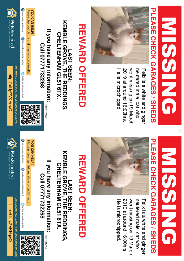 Lost pet flyers - Lost cat: White and ginger cat called Felix