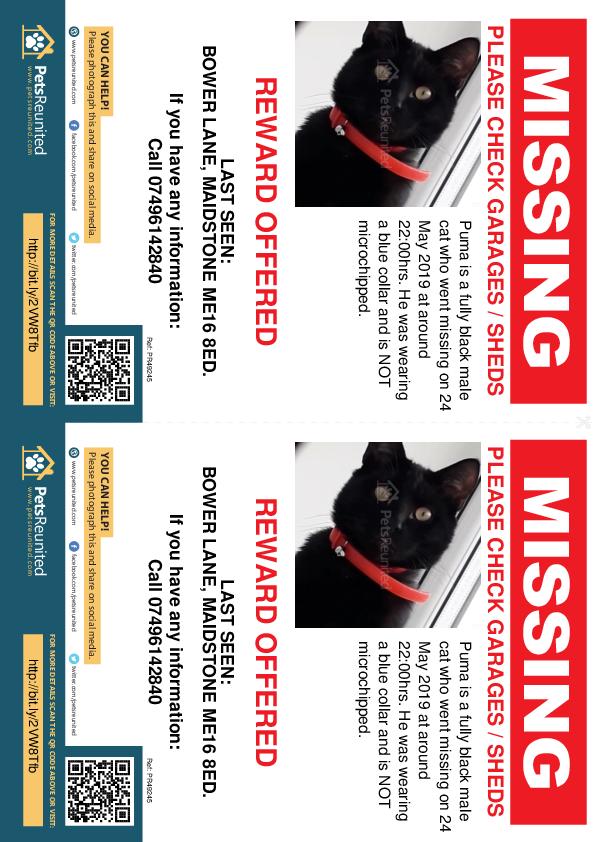 Lost pet flyers - Lost cat: Fully black cat called Puma