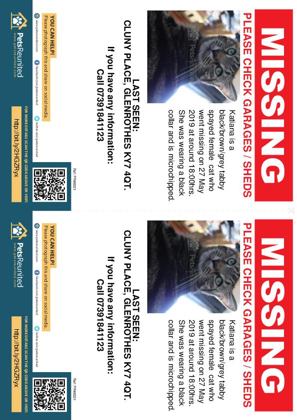 Lost pet flyers - Lost cat: Black/brown/grey tabby cat called Katiana