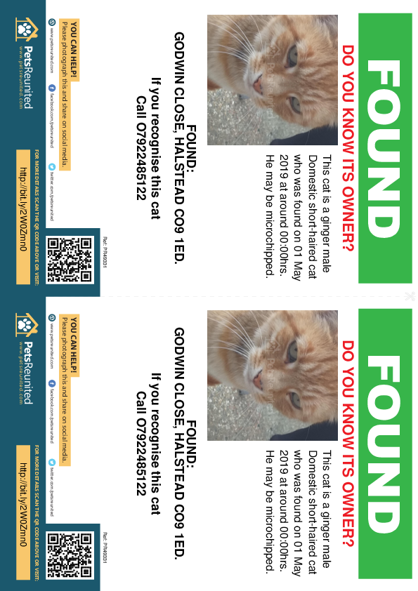Found pet flyers - Found cat: Ginger cat